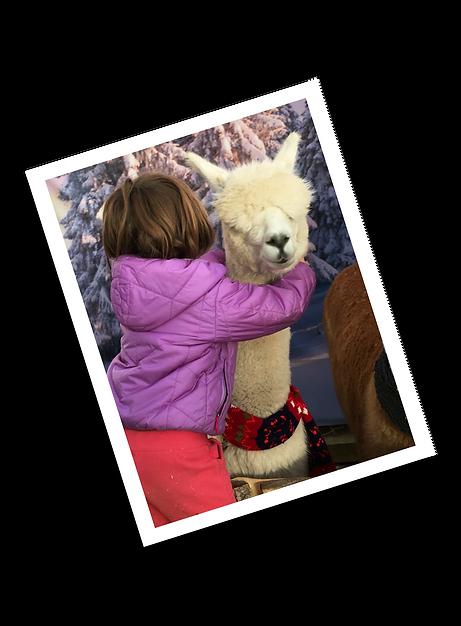 Granary Road Alpaca Hug.png