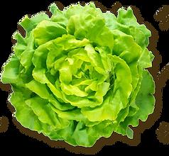 FF Lettuce.png