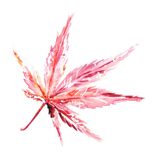 muted red acer leaf.jpg