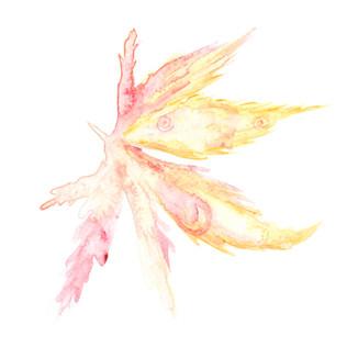 faint yellowy acer leaf.jpg