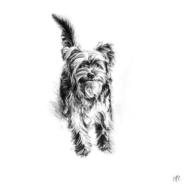 5B Yorkshire terrier - Princess.jpg