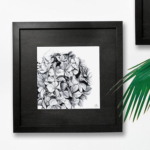 Hydrangea Watercolour Print