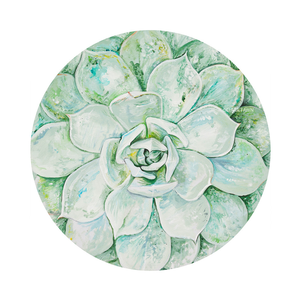 Green-succulent-watermarked.jpg