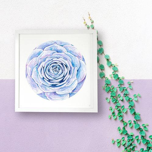 Purple Succulent Limited Edition Print