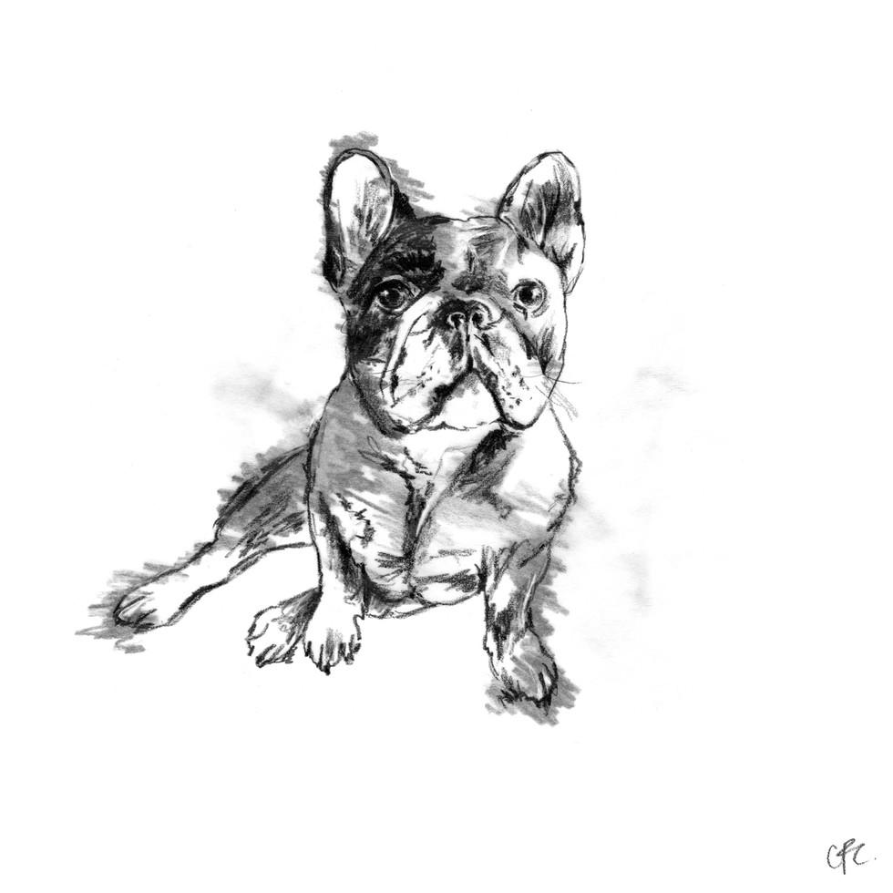 5B French bulldog.jpg