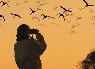 Birdwatching-1150x836.jpg