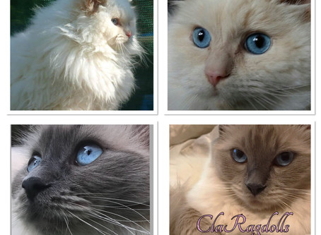 Kittens update!
