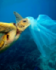 Turtle_eating_plastic_bag.png