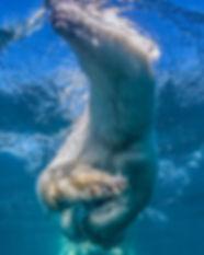 Polar bear paws(s) shake.jpg