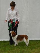 Papikoi Miniature American Shepherds and kooikerhondje