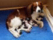 Wispa pups (1).jpg