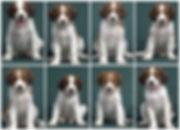 Wispa pups 8 weeks.jpg