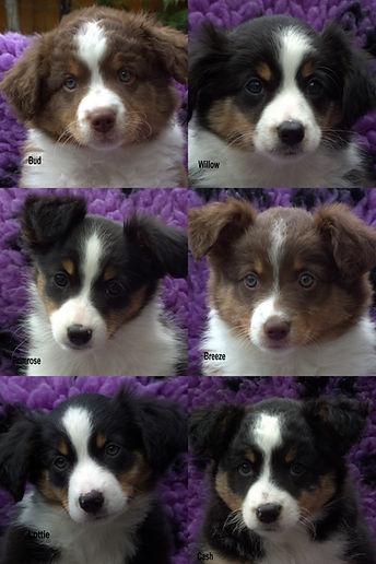 Mazy pups 7.jpg