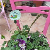 silla rosa.jpg