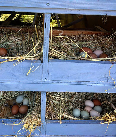 eggs, scuttleship farm