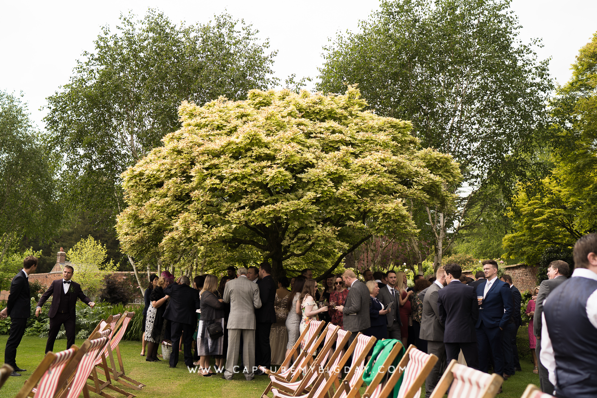 wedding guests under tree