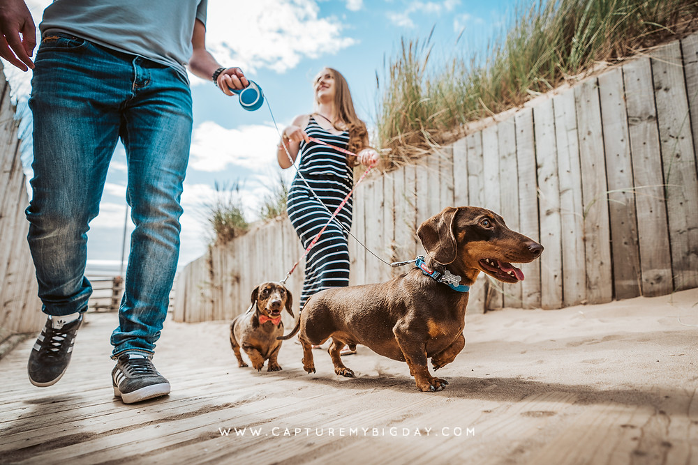 Engagement photoshoot with Dogs