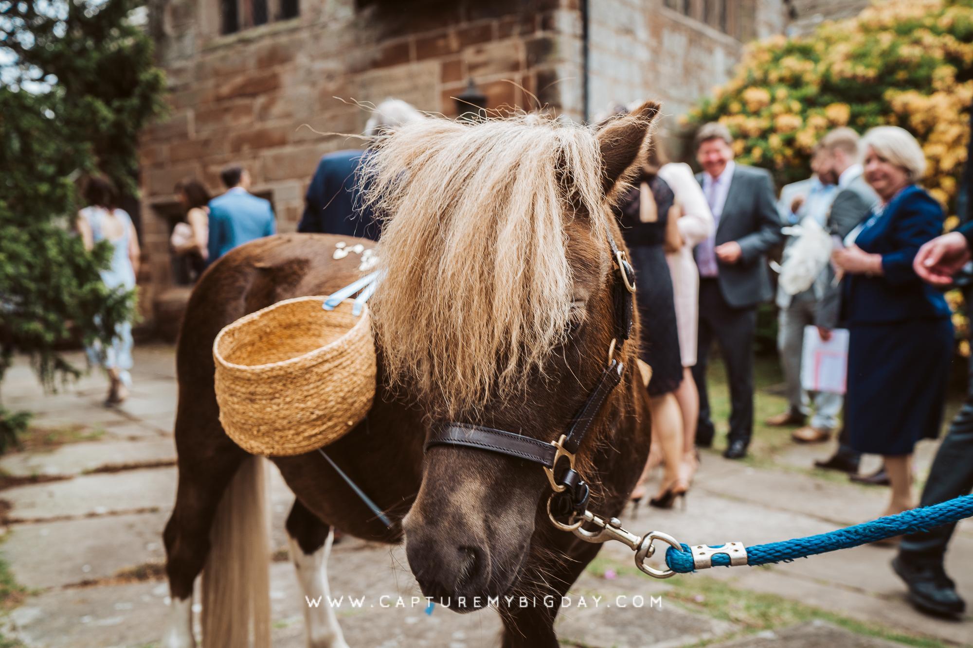 Pony at church wedding