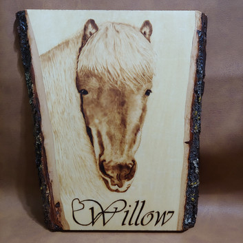 In Memory Of Willow
