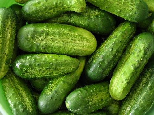 National Pickling Cucumber (Pre-Order Discount)