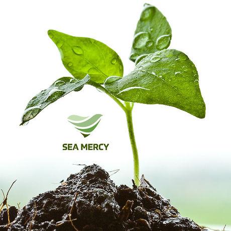 SeaMercy-Logo.jpg