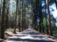 green image Mari Luz.jpg