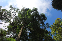 Sintra forests