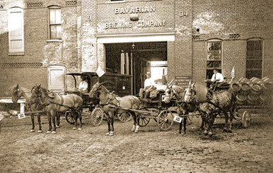 Horse Drawn Delivery Wagons, Bavarian Brewing Co., Covington, KY.  c. 1905