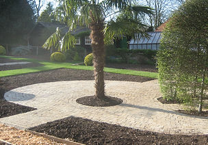palm, palm tree, garden, bricks, path