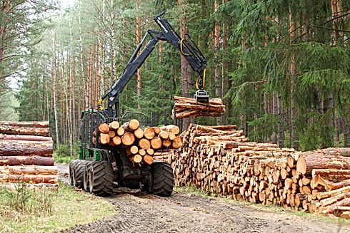 The harvester working in a forest. Harvest of timber. Firewood as a renewable energy source. Agricul