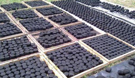 Produire du charbon écologique