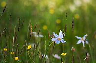 Blue flower ales-krivec-unsplash.jpg