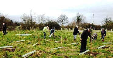 Tree planting in Hanley Swan