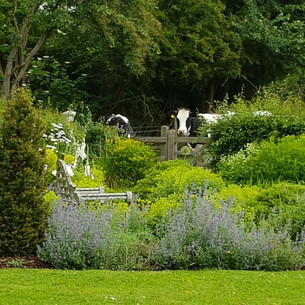 Green and white planting with black and white cows!