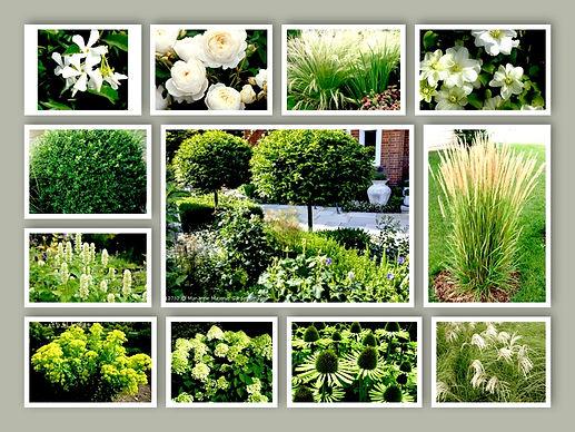 white-border-planting.pg