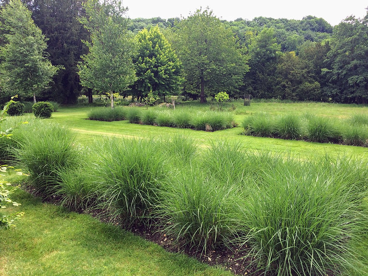 Grasses and mown paths.JPG