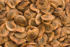 Yellow rattle seed.jpg