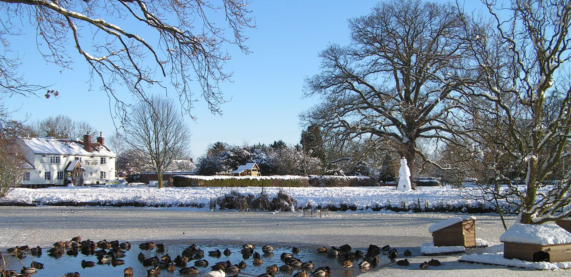 Winter 2010, Hanley Swan pond