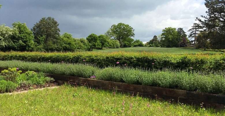 The turf with hedge and field beyond.