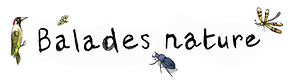 Logo balades nature_avec illus-1.png