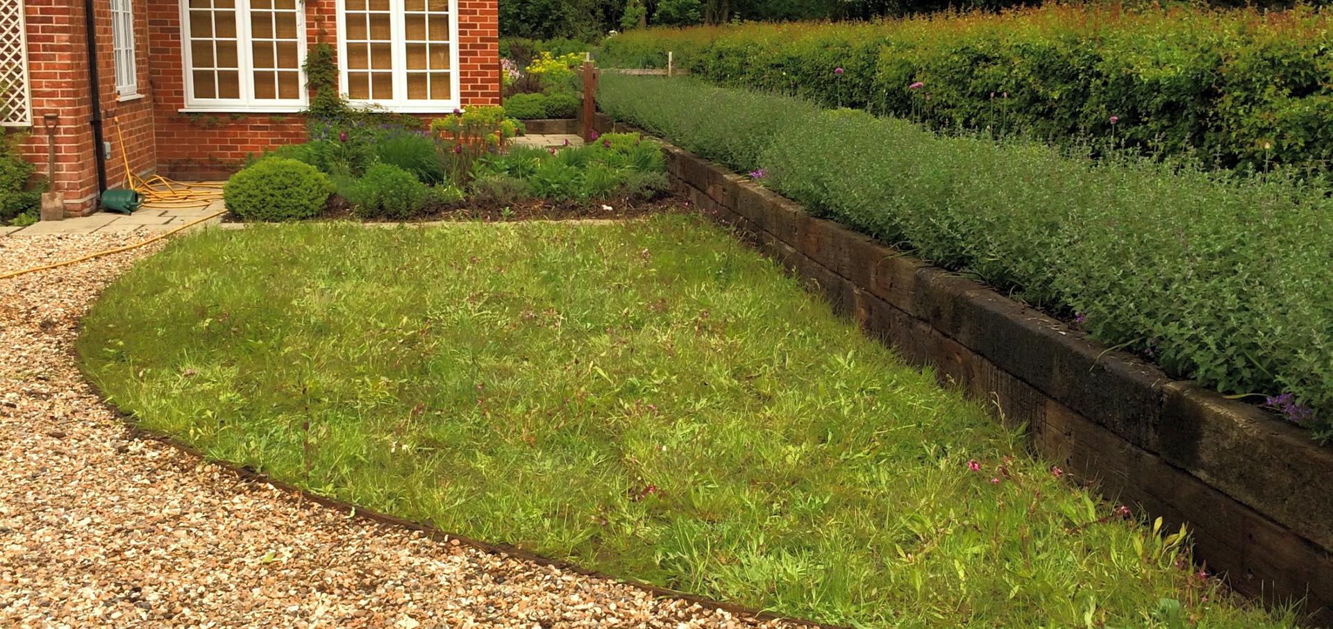 Wildflower turf, newly laid.