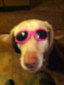 MAGGIE AND HER SHADES