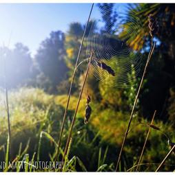 Glistening web