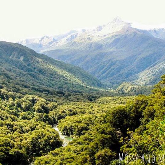 Bush Mountains