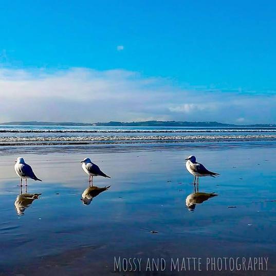 Graceful gulls