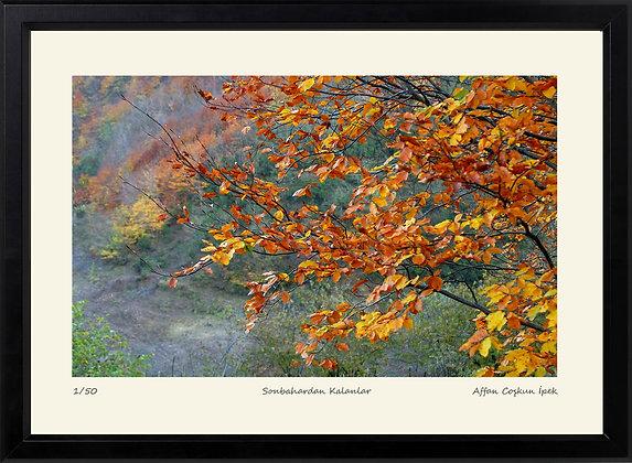 Sonbahardan Kalanlar || Edisyon Baskı Fotoğraf