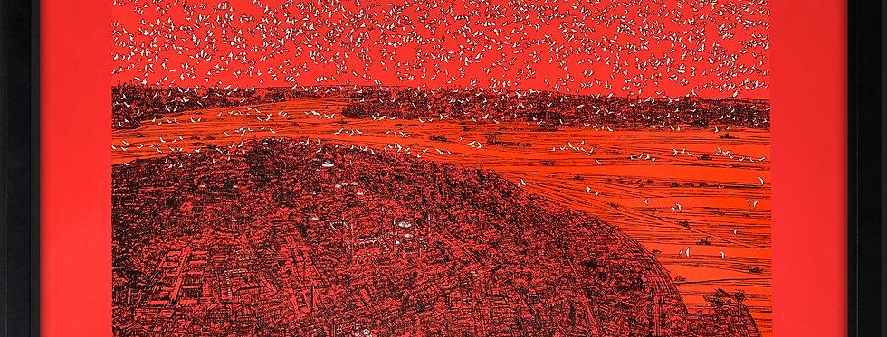 Devrim Erbil || İstanbul Eski Yarımada ve Kuşlar