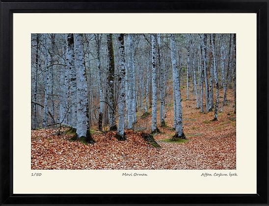 Mavi Orman || Edisyon Baskı Fotoğraf