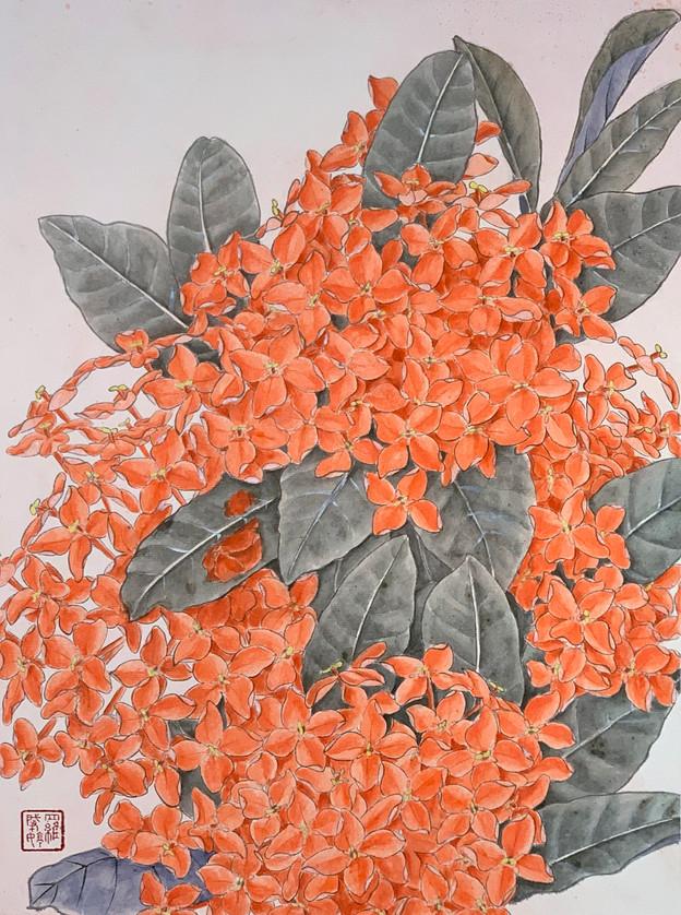 Orange Ixora