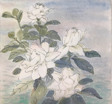 White Camellia 白茶